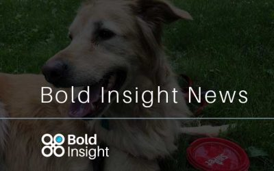 Bold Insight sponsors Run4Paws benefiting Magnificent Mutts & Meows Rescue
